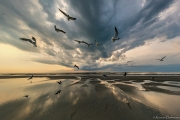 Winged explosion, Jacksonville Beach